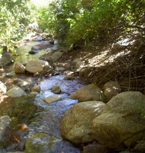 A refreshing stream in Colorado
