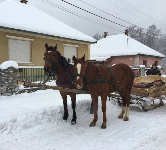 Two Horse Sleigh w