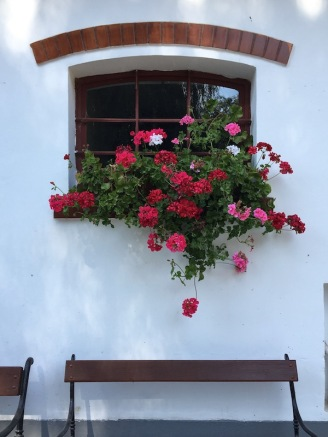 Window Flowers w