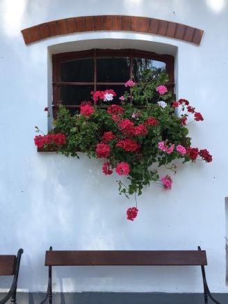 Window Flowers w