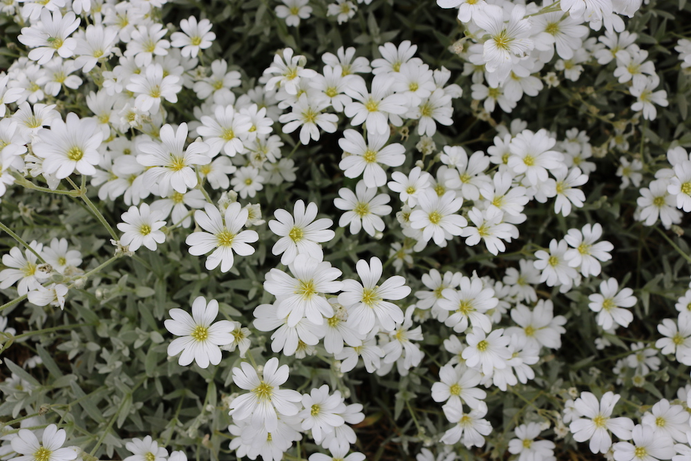 Flowers w